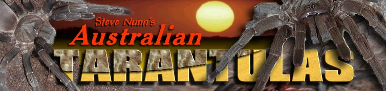 Welcome to Steve Nunn's Australian Tarantula Site